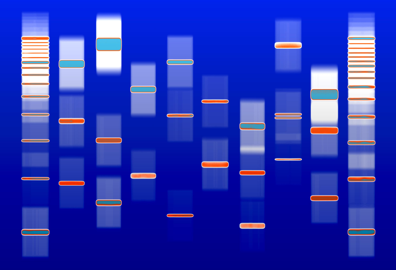DNA wall art