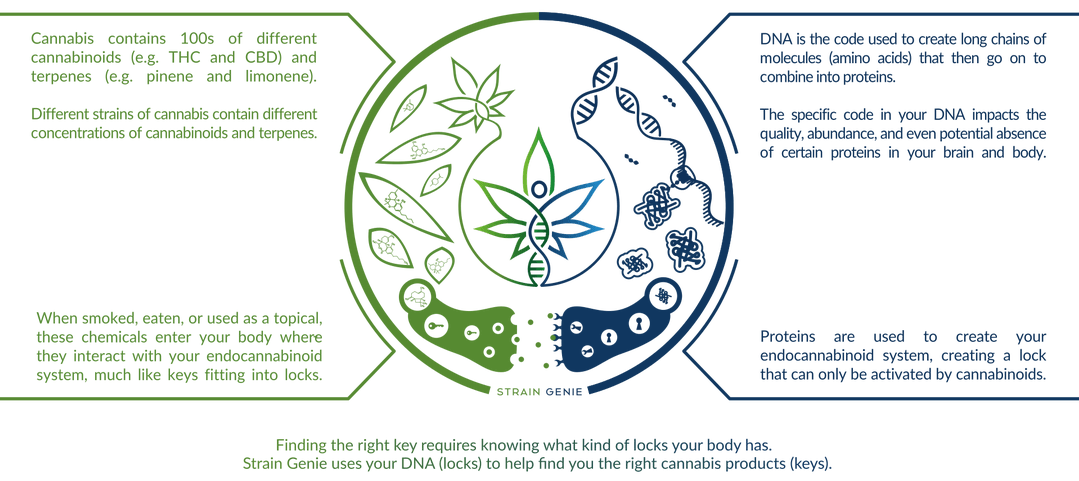 THC and CBD Guide for DNA Testing